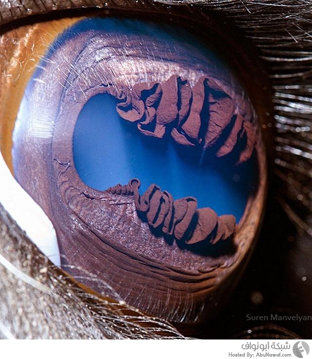 عيون الحيوانات