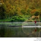 غابات إندونيسيا