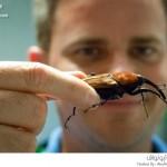 إفتتاح قسم للحشرات في حديقة هيوستن