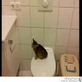 قطة تقفز