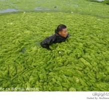 الطحالب البحرية