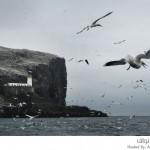 مستعمرة للطيور البحرية