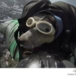 كلب يطير wingsuit