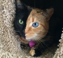 القطة فينوس أشهر نجوم فيسبوك و انستقرام