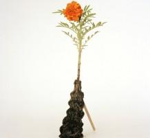 جذور النباتات