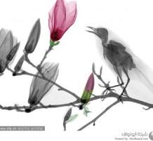 دمج صور الأشعة السينية مع الفن