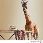 صور طريفه عن تغيير الحيوانات