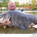 أكبر سمكة شبوط