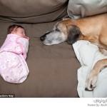 الصداقة بين الكلاب الكبيرة والأطفال