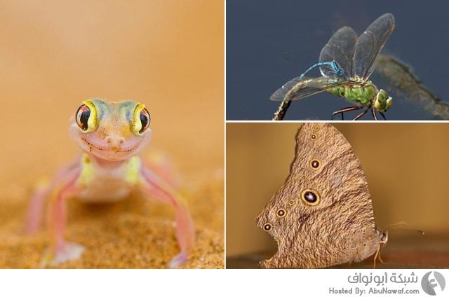 الصور الفائزة بمسابقة أسرار الطبيعة للتصوير الفوتوغرافي