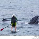 رجل يخاطر بحياته للالتقاء وجهاً لوجه مع الحيتان العملاقة
