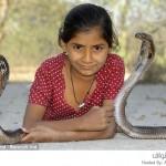 طفلة تعتبر أفعى الكوبرا صديقتها المقربة