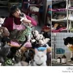 ممرضة تحول منزلها إلى ملجأ لرعاية القطط