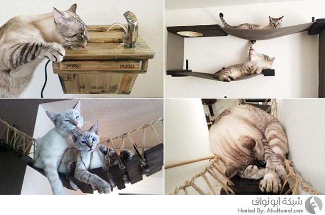 أثاث قطط