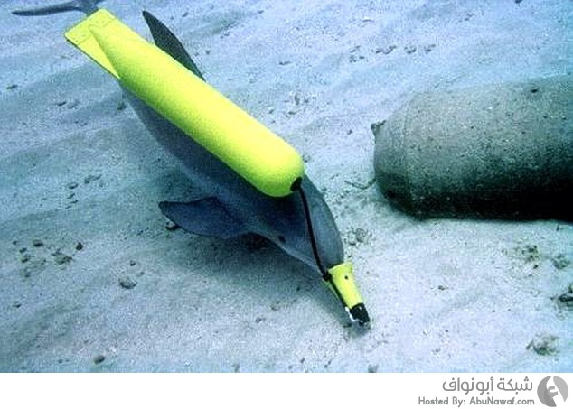 الدلافين تنضم إلى قوات الدفاع الروسية