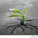 نباتات تخرج من الأرض