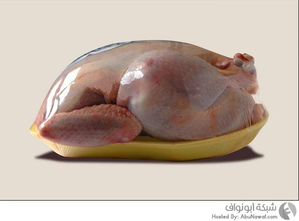 تسمم الدجاج4