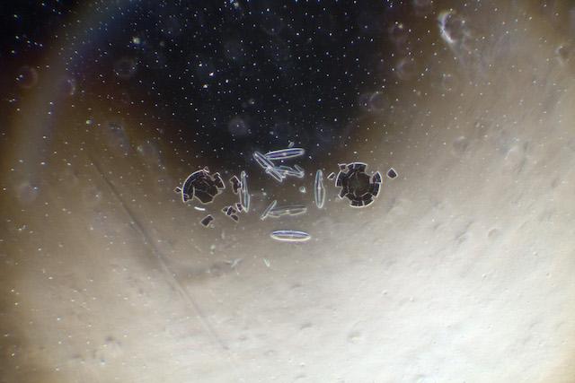 العوالق المجهرية مجهر تصوير كائنات دقيقة
