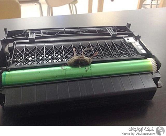 فأر طابعة مسكن