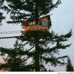 منزل أشجار معلق