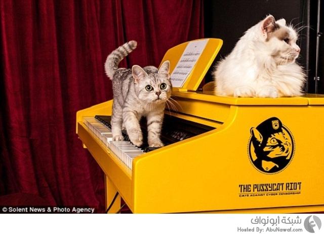 بيانو للقطط فقط