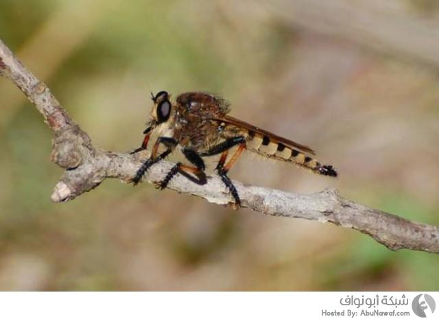 حشرة قاتلة