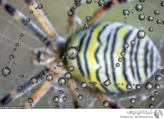 لقطات لانعكاسات قطرات الندى في الطبيعة