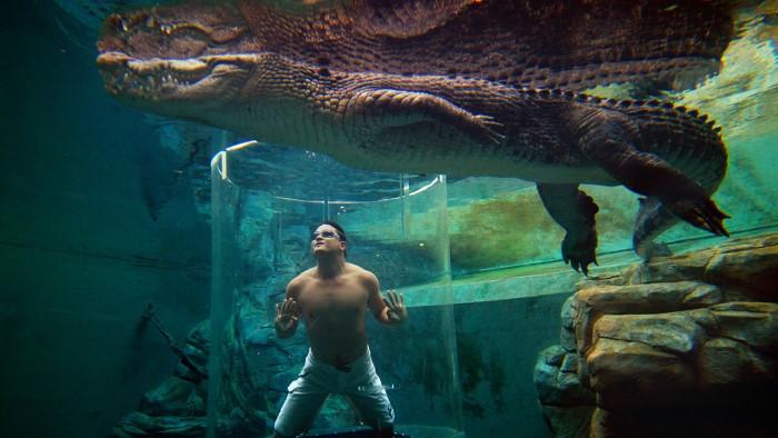 تمساح منتزه Crocosaurus