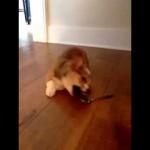 كيف كان اللقاء الأول بين الكلب والملعقة