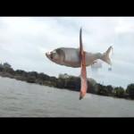 صيد سمك بطريقة غريبة