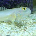 سمكة نادرة وغريبة