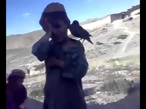 طائر يبكي عند بكاء الطفل
