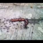 حياة النمل