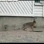 غضب الأرانب