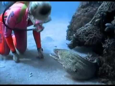 غواصة شجاعة تصادق سمكة مفترسة..! (فيديو)
