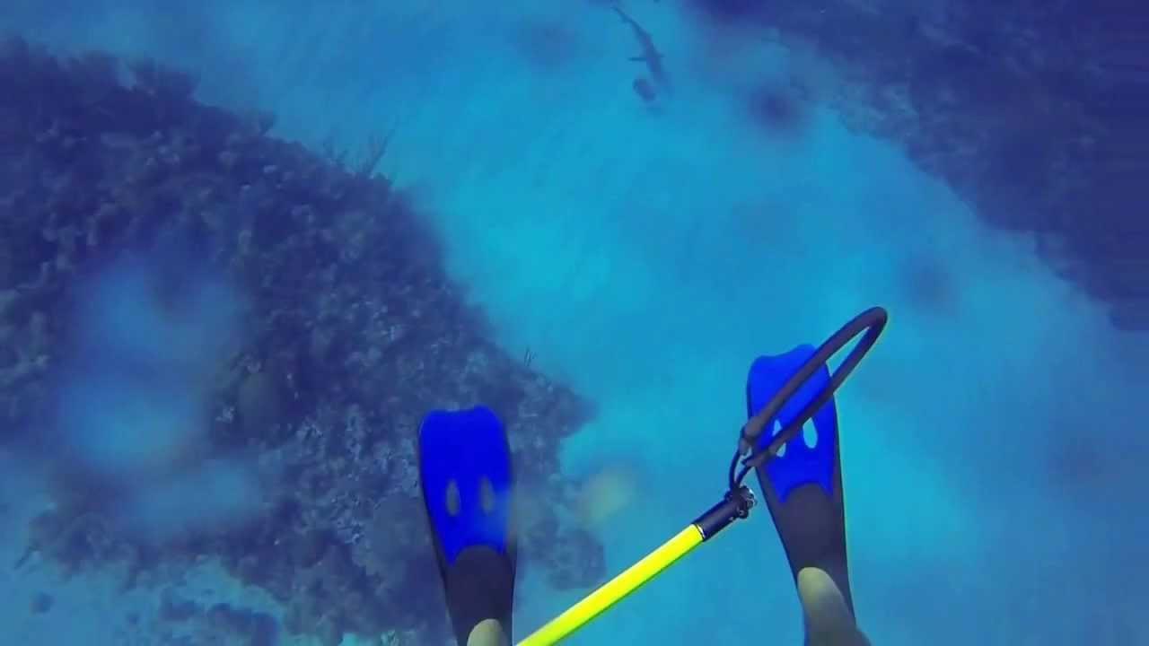 غواص يصور هجوم قرش في داخل البحر (فيديو)