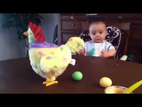 ردة فعل ظريفة لرضيع عند وضع الدجاجة بيضها..! (فيديو)