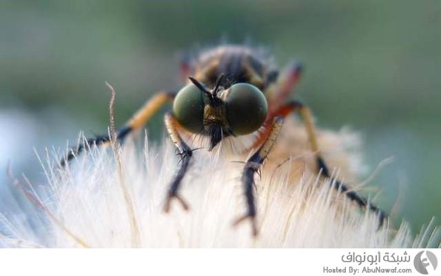 حشرات قاتلة
