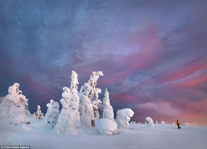 أشجار جليدية2