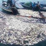 قنابل صيد السمك