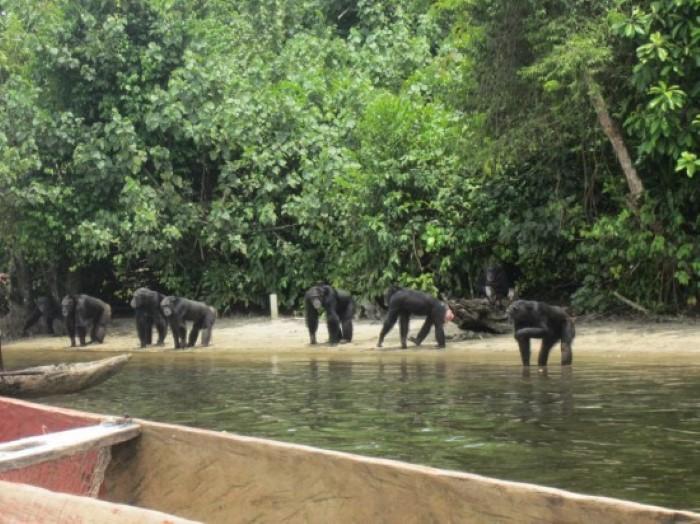 جزيرة القرود الحقيقية