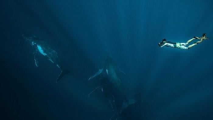 تصوير حيتان تحت سطح الماء