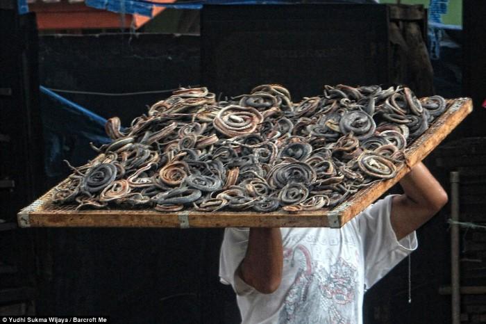 مسلخ ثعابين قبل الوصول إلى المنتجات الجلدية الفاخرة