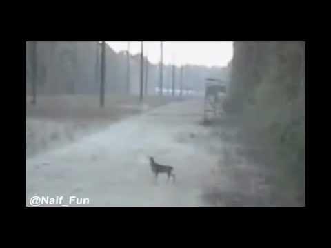 صور + فيديو : حيوان الفهد + صياد من جنبها .. والمزيد