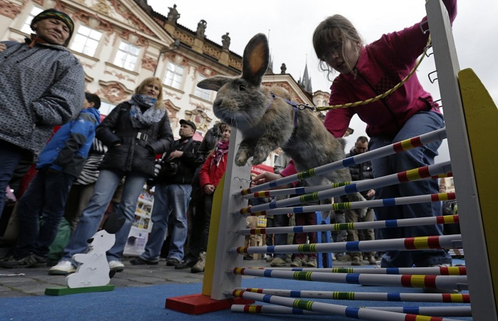سباق الأرانب