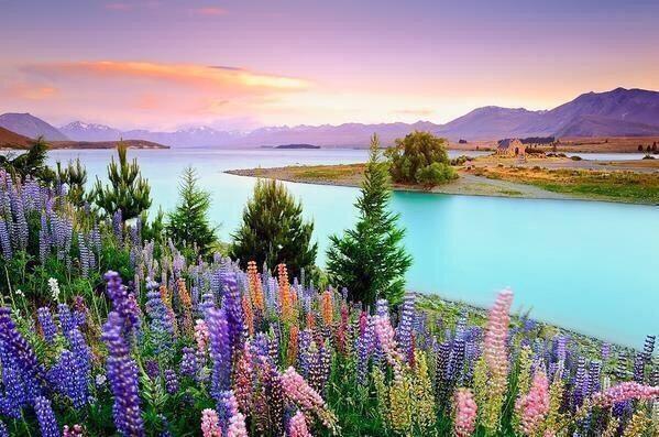 البحيرة الفيروزية في نيوزلاندا