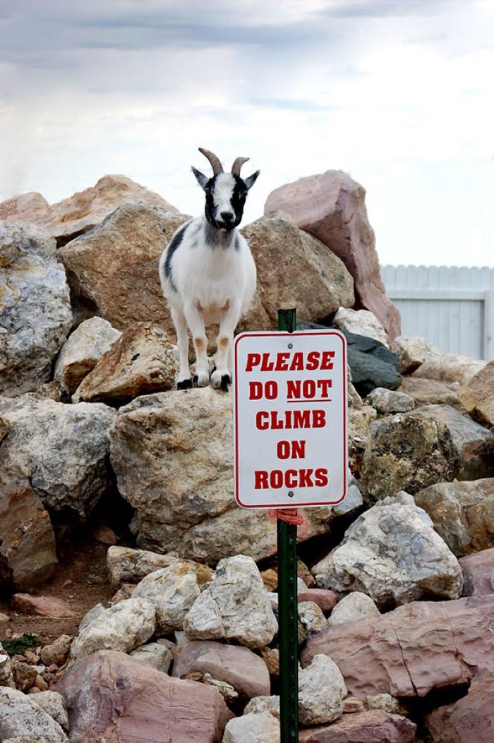 ممنوع التسلق