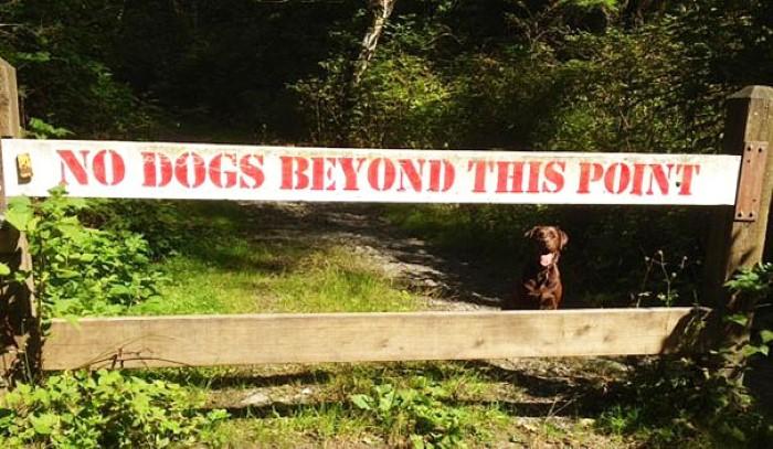 ممنوع دخول الكلاب