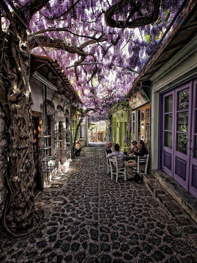 أجمل الشوارع في العالم المغطاة بالزهور والأشجار موليفوس، يسفوس، اليونان