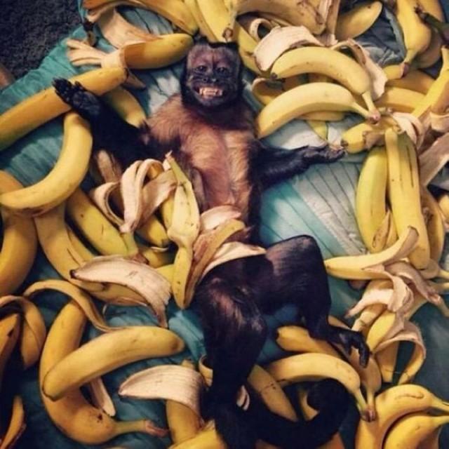 صور جميلة معبرة غريبة في الوقت المناسب قرد وموز
